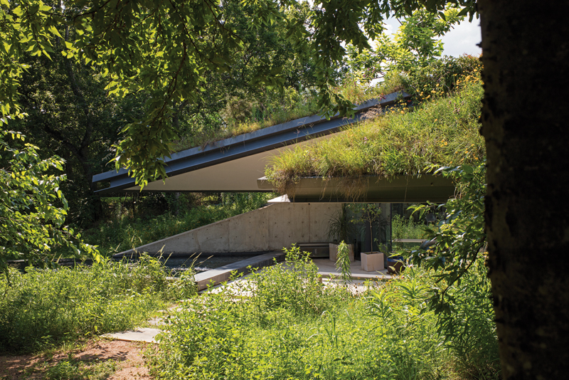 0P6A7410 EDGELAND HOUSE _ SIDE VIEW OF ROOF APEXES AND APEX POOL FRAMED BY ADJACENT TREE