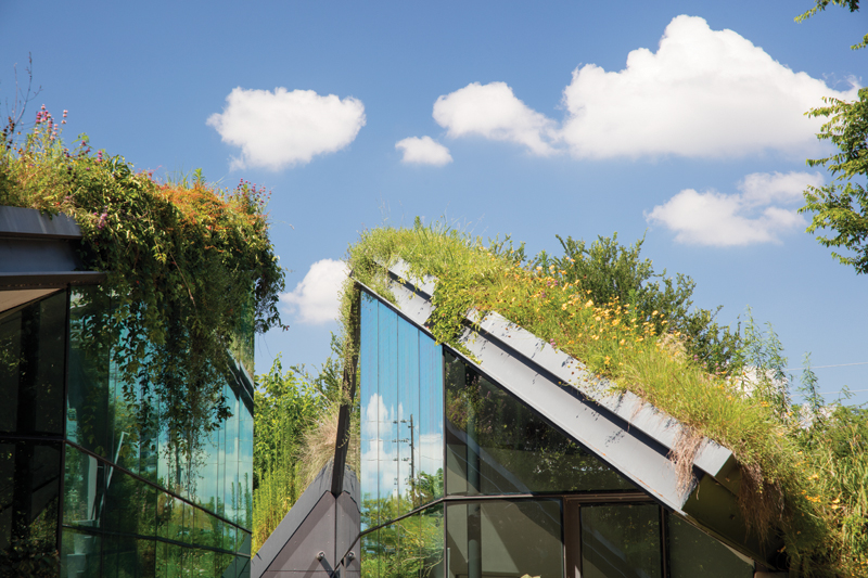0P6A7432 EDGELAND HOUSE _ GREEN ROOFS AND GLASS CANYON VIEWED FROM POOL AREA