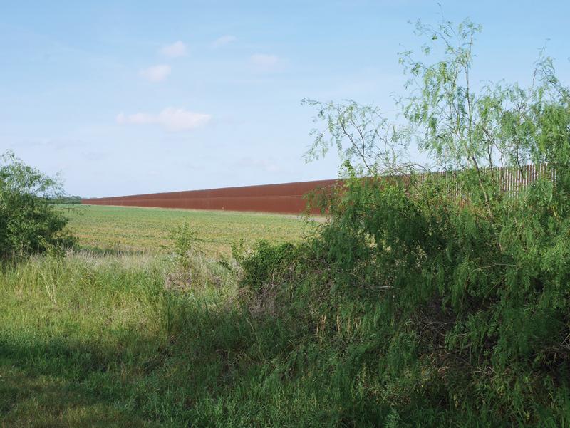 Sabal Palm_border wall_JMiller