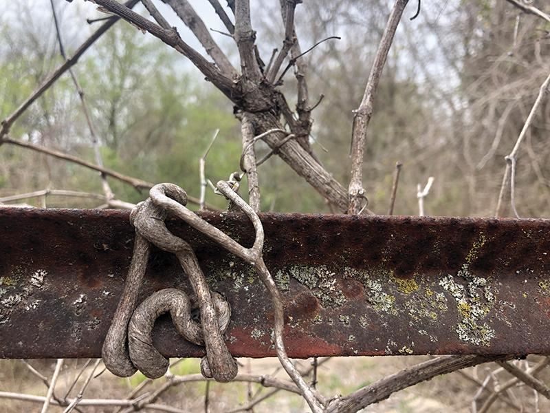 vine rail curl
