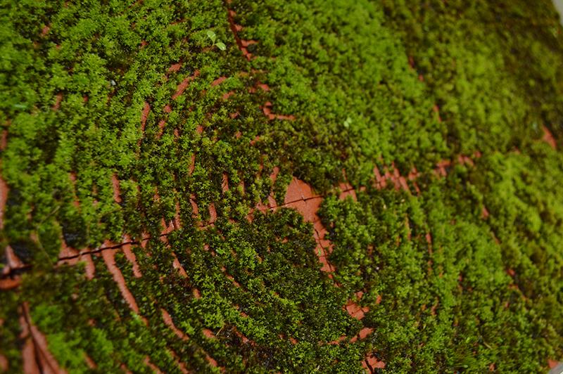 Moss_Tiles_Image_1