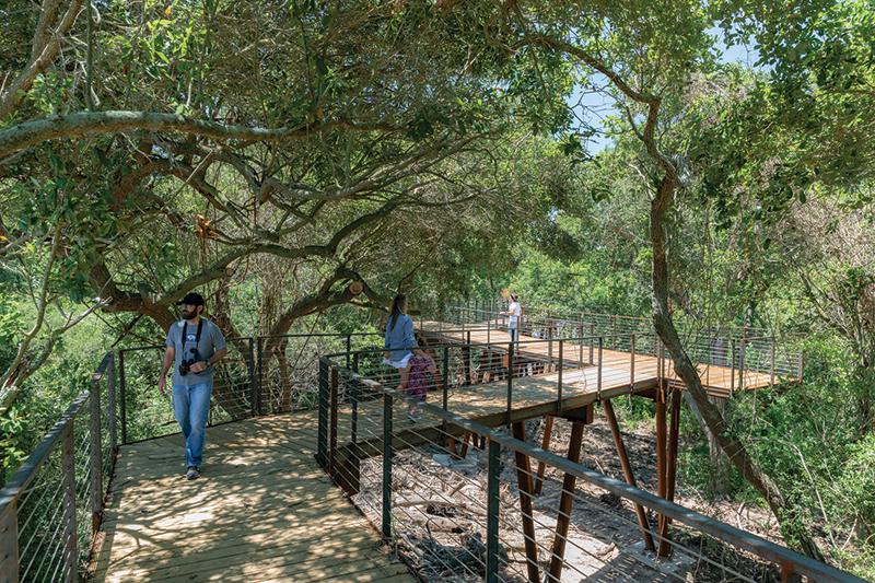 High Island Audubon Canopy Walk - Jonnu Singleton-SWA-1265